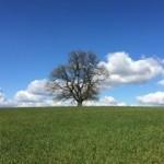 Sue - tree on horizon