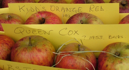Somerset Cider Apples
