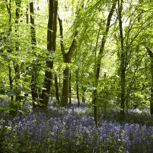 Bluebell Trail special offer