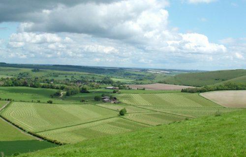 Dorset Landscape1