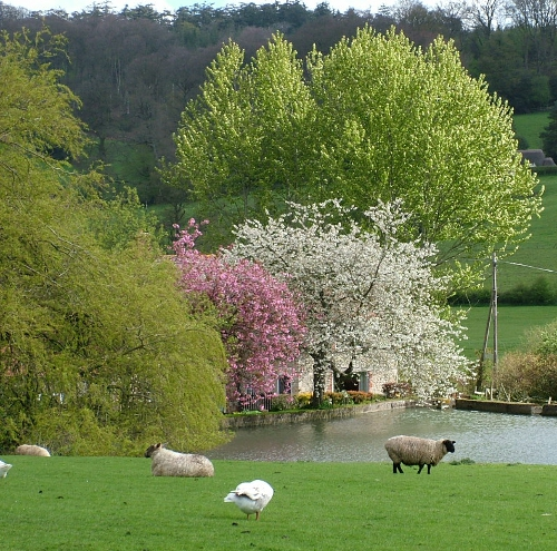 Wiltshire Spring Countryside
