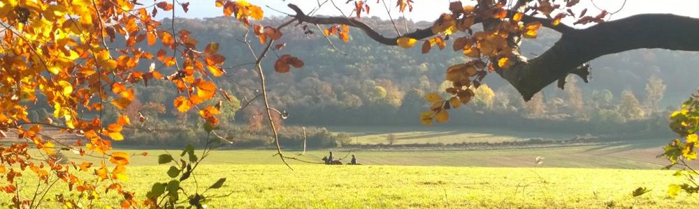 Hasil gambar untuk autumn