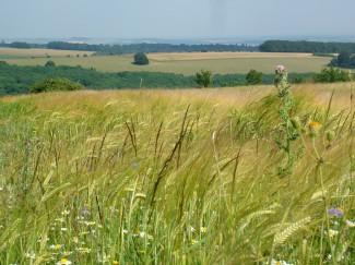Dorset Meadows
