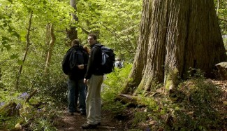 Woodland Dorset guided walking tour.