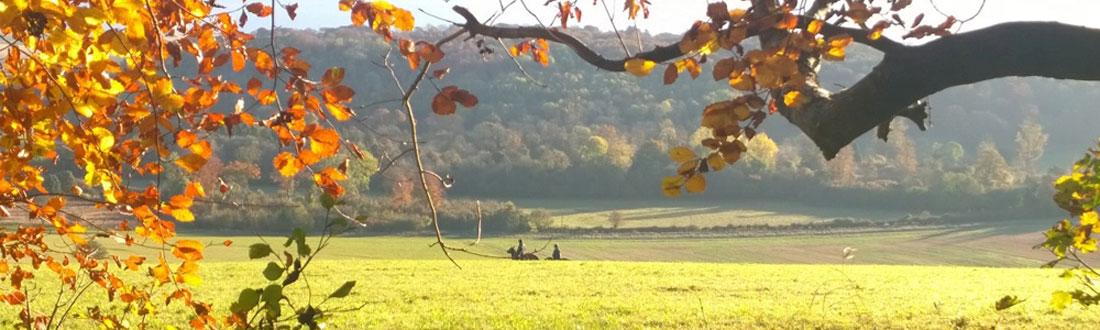 Autumn walking inspiration
