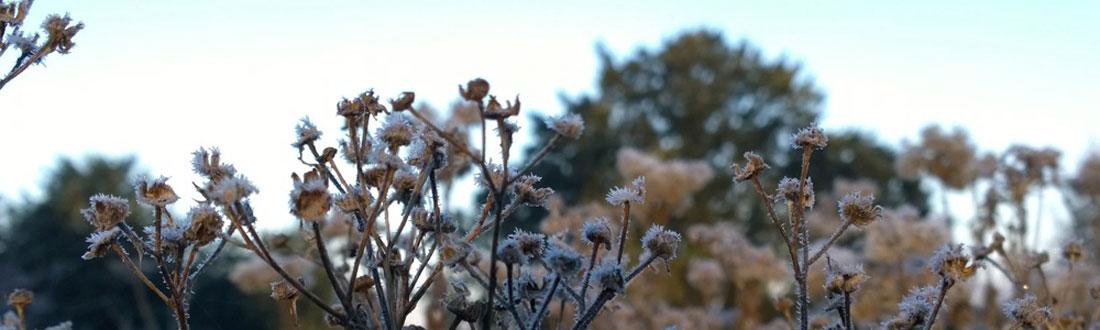 Winter walking inspiration