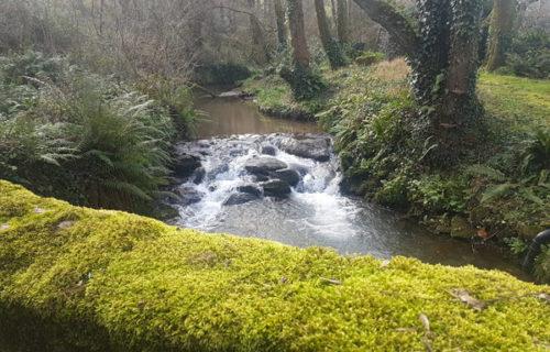 View of a Devon stream