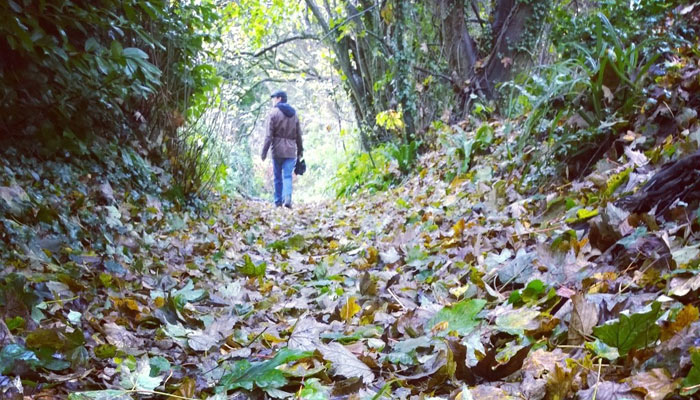 Book now for autumn walking trips