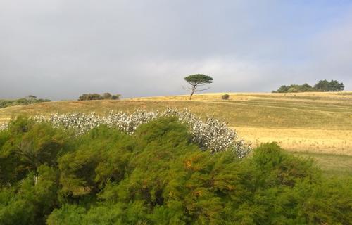 dorset-countryside